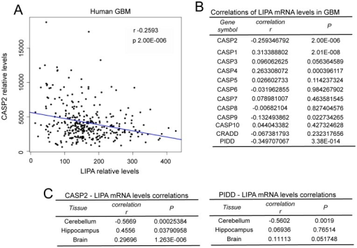 Analysis of LIPA and caspases expression in GBM and different areas of the CNS.A. Plot of CASP2 versus LIPA expression levels in GBM. Linear regression is reported. B. Correlations in expression levels between LIPA and the indicated genes in GBM. C. Correlations in expression levels between LIPA and the indicated genes in different CNS areas.