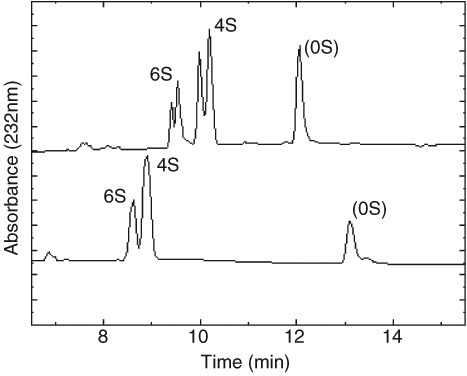 Typical electropherogram of chondroitin disaccharides from ovine articular cartilage. (A) Double peaks result from anomeric forms of hexosamine. (B) Different ages of background buffer alter the resolution of these anomeric forms. 6S indicates Δdi-mono6S, 4S indicates Δdi-mono4S, and 0S represents unsulfated chondroitin disaccharide.
