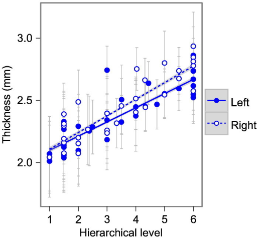Human functional hierarchy. Cortical thickness (mm) increases with fMRI-derived functional hierarchical level (Grill-Spector and Malach, 2004) in humans (See Table 1 for statistical results). Points represent mean thickness value for a random sample region across 83 subjects; error bars represent population standard deviation. Lines show linear model with grey 95% confidence band for population trend. Solid lines and filled circles show left hemisphere, dashed lines and hollow circles show right hemisphere.