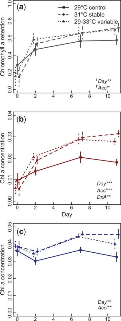 "Bleaching resistance in Acropora nana branches acclimated under control (29°C), stable (31°C), and variable (29–33°C) conditions. Measurements were taken after 0, 2, 7, and 11 days. Bleaching is measured as the fraction of chlorophyll a retained in a particular colony after heat stress (a), calculated by dividing the concentration of chlorophyll a in heat-stressed branches (b) by that in nonstressed branches (c). Significant factors from ANOVA, ""Day,"" ""Accl""—acclimation treatment, and ""DxA""—interaction between Day and Acclimation, are shown in bottom left corner (†Day 0 was omitted for significance testing). Error bars represent standard error across six branches."