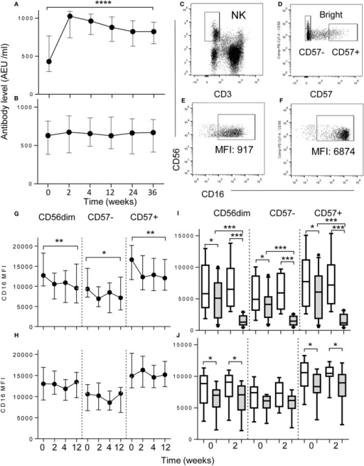 Downregulation of NK cell CD16 expression after vaccination. (A,B) Increased plasma concentrations of anti-influenza IgG after (A) intramuscular (I.M, n = 17) but not after (B) intranasal vaccination (I. N, n = 18) up to 36 weeks after vaccination. Data represent median values with interquartile ranges. (C–F) Flow cytometric gating to assess the impact of vaccination on CD16 expression in CD56dim, CD57−, or CD57+ NK cell subsets, ex vivo. NK cells were gated as CD56+ CD3−(C) and then as CD56bright, CD56dimCD57− or CD56dimCD57+(D). (E,F) For determination of antigen-driven effects CD16+ CD56+ NK cells were gated among PBMC cultured with TIV and immune plasma (E) or immune plasma without TIV (F). Ex vivo analysis of CD16 expression at baseline (0), 2, 4, and 12 weeks after intramuscular (I. M) vaccination with TIV (G) or intranasal (I.N.) vaccination with LAIV (H). Impact on NK cell CD16 expression of culturing baseline PBMC with TIV (shaded bars) or without TIV (open bars) and either pre- (0) and post- (2) vaccination I.M. (I) or I.N. (J) plasma; data are shown for CD56dim, CD57−, and CD57+ NK subsets after 6 h of in vitro culture with TIV. Trend analysis was performed using a one-way repeated measures ANOVA. Paired comparisons between pre- and post-vaccination plasma were made using Mann–Whitney U test. *p < 0.05, **p < 0.01, ***p < 0.001, ****p < 0.0001.