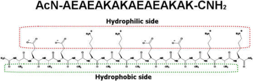 Schematic diagram of EAK16-II structure.The red portion shows the hydrophilic side of the peptide and the green portion shows the hydrophobic side of the peptide.
