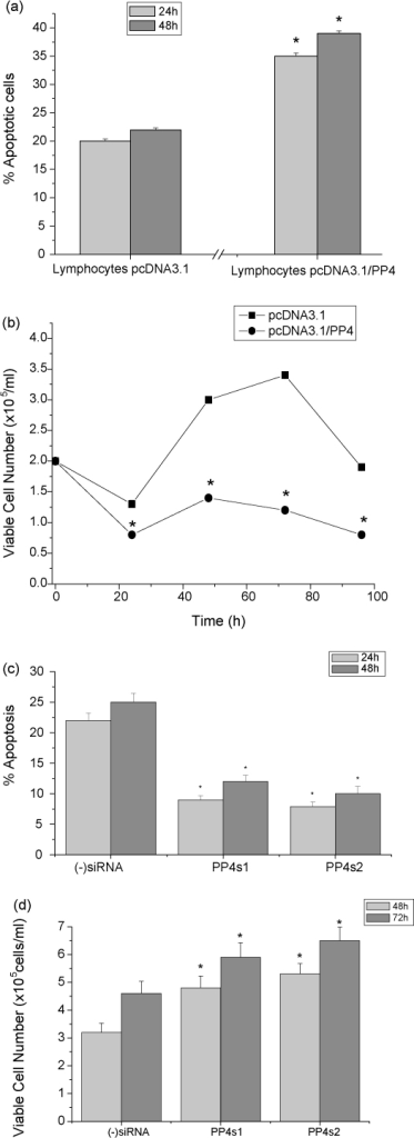 Up-regulation and down-regulation of PP4c expression produce complementary effects on the survival and growth of human peripheral blood lymphocytes. (Graphs (a) and (b)) Peripheral blood lymphocytes were cultured in complete RPMI medium supplemented with 2.5 μg/ml PHA for 5 days and transiently transfected with either pcDNA3.1 or pcDNA3.1-PP4c. (a) Apoptosis was determined at 24 and 48 h time points using CaspaTag (means ± S.E. from five independent experiments). (b) Viable cell numbers were determined by vital dye staining, at the indicated time points (means ± S.E. from seven independent experiments). (Graphs (c) and (d)) Peripheral blood lymphocytes were cultured in complete RPMI medium supplemented with 2.5 μg/ml PHA for 5 days and transfected with (−)siRNA, PP4s1 or PP4s2. (c) Caspase activation, as a marker of apoptosis, was determined at 24 and 48 h (means ± S.E. from six independent experiments). (d) Viable cell number was determined by vital dye staining (means ± S.E. from six independent experiments).