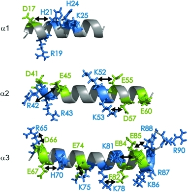 KIX α helices with possible salt bridges between basic (blue) and acidic (green) residues indicated by arrows.