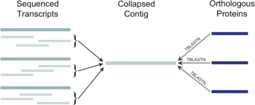 Possible contig collapse identified in TBLASTN search. During assembly, a paralogous gene family may be collapsed into a single representative contig. If paralogs are individually represented in a reference dataset, this collapse may be found by matching the related proteins against unigenes and assessing hit counts for target sequences.
