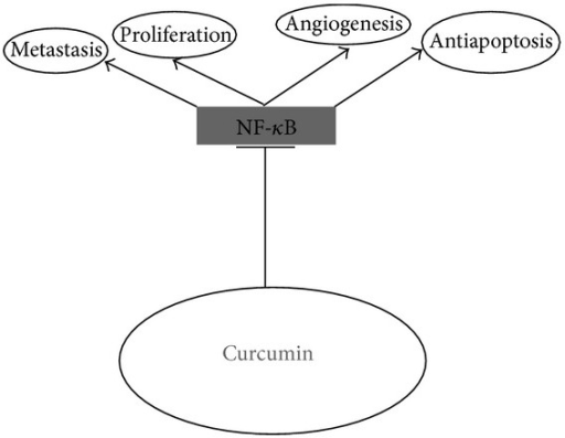 Molecular targets of curcumin in pancreatic cancer cells.