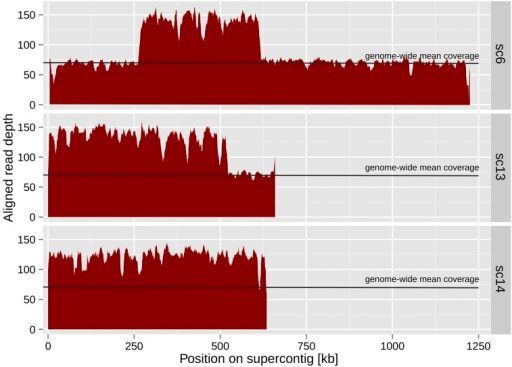 Aligned read depth on supercontigs of IP96/1120-1. Read depth was approximately 2-fold higher than the genome-wide mean coverage on supercontigs 6, 13, and 14. Variation in read depth on supercontigs 6 and 13 suggests partial duplications across the region of the chromosome mapping to these supercontigs. Read depth on supercontig 14 suggests duplication of the entire region represented by this supercontig.