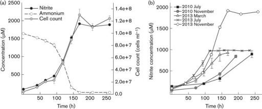 (a) Growth curve of a culture of strain EN76T grown at 42 °C with 2 mM NH4Cl and 1 mM pyruvate. Cell counts, ammonium consumption and nitrite production were used to follow growth. Data represent mean values of triplicate cultures with standard deviations plotted (sometimes smaller than symbols). (b) Acceleration of growth of strain EN76T since purification of the strain in 2010 (Tourna et al., 2011). The cultivation conditions were as follows: July 2010 and November 2010, 37 °C, 1 mM NH4Cl, 1 mM pyruvate; March 2013, 37 °C, 1 mM NH4Cl, 0.1 mM pyruvate; July 2013, 42 °C, 1 mM NH4Cl, 0.8 mM pyruvate; November 2013, 42 °C, 2 mM NH4Cl, 1 mM pyruvate. Nitrite production was used to follow growth. Data represent mean values of replicated cultures (three to five replicates) with standard deviations plotted (sometimes smaller than symbols). Data points previously published in Fig. 3(b) of Tourna et al. (2011) (i.e. July 2010) were included in the figure.