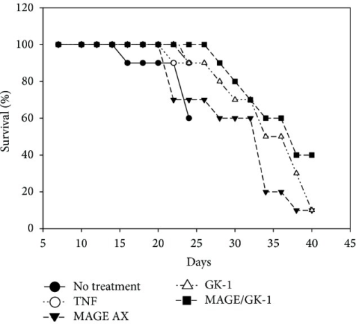 Mice survival. Survival of mice with melanoma inoculated with BMDCs matured with TNFα and treated with MAGE-AX, GK-1, or MAGE-AX/GK-1. The MAGE-AX/GK-1 group was the one which had a higher survival rate: 40% up to 1.5 years after being inoculated with the BMCDs. It is followed by the GK-1, MAGE-AX, TNFα, and untreated group (WT), respectively.