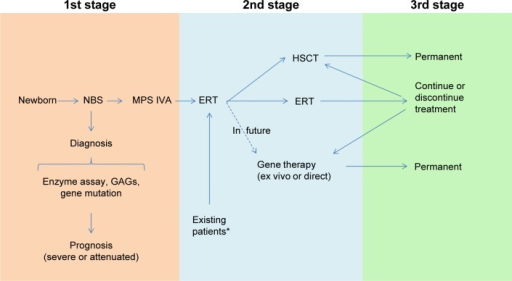 Model for diagnosis and treatment of patients with MPS IVA.Notes: *KS and C6S, which are stored in MPS IVA patients, are normalized or subnormalized naturally after synthesis of these GAGs is decreased with age (after teenage). Therefore, ERT may not be required for the group of patients who may have established bone lesions without risk of lung issue and may not be required permanently once lung issue is resolved. Especially, after 20 years of age with normalized KS and C6S, the cost/benefit of ERT should be evaluated carefully.Abbreviations: MPS, mucopolysaccharidosis; KS, keratan sulfate; C6S, chondroitin 6-sulfate; GAGs, glycosaminoglycans; ERT, enzyme replacement therapy; NBS, newborn screening; HSCT, hematopoietic stem cell transplantation.