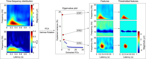 Time-frequency feature isolation using PCA decomposition with Varimax rotation.Left: Group-level TFDs of laser-elicited responses at electrode Cz. x-axis: latency (s); y-axis: frequency (Hz). Both TFDs (top: Magnitude; bottom: PLV) were averaged across all single-trial TFDs of all subjects, after subtracting the baseline. As compared to the baseline, significant differences in PLVs are outlined in white (bootstrapping test with FDR correction), which indicate that only the ERP response was phase-locked to stimulus onset, while the other TFD responses were not. Middle: The eigenvalue plot shows the variance explained by the first 30 extracted PCs. The first three PCs explained the largest amount of variance in the data (23.1%, 9.2% and 5.9%, corresponding to ERP, ERD and ERS responses), while the explained variance for any of the remaining PCs was less than 5%. Right: The first three PCs correspond to the ERP, ERD and ERS in the time-frequency plane, respectively. The thresholded TFDs were obtained by applying a two-SD cut-off. The amount of background EEG noise was remarkably reduced, while the regions corresponding to ERP/ERS/ERD responses were clearly preserved. The ERP region was located at 50–550 ms post-stimulus (in time) and 3–10 Hz (in frequency); the ERD region at 50–1000 ms and 9–12 Hz; the ERS region at 217–447 ms and 10–19 Hz in frequency.
