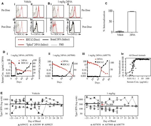 24F4A mediates BDCA2 internalization and type I IFN inhibition in vivoCynomolgus monkeys were administered 24F4A (10 or 1 mg/kg) or vehicle (n = 3 for each dose group) intravenously. Cynomolgus monkeys were bled at various time points, and flow cytometry was used to measure BDCA2 expression and receptor occupancy. PDCs were defined as CD20−, CD14−, CD123+, and HLADR+.A–C Prior to in vivo dosing, baseline surface levels of BDCA2 for both the vehicle (Ai) and 1 mg/kg (Bi) animals (red, dotted line) were established by staining with fluorescently labeled 24F4A (direct method). Maximal binding of 24F4A to BDCA2 was also established pre-dose in the vehicle (Aii) and 1 mg/kg (Bii) animals (red, solid line) by treating whole blood with 10 μg/ml of 24F4A at 4°C and then detecting bound 24F4A with a fluorescently labeled anti-human IgG1 (indirect method). The direct method was used to stain whole blood from both the vehicle (Aiii) and 1 mg/kg 24F4A (Biii) animals 6 h post-dose (red, dotted line). In a separate stain, the indirect method was used to detect bound 24F4A in the vehicle (Aiv) and 1 mg/kg (Biv) treated animals (black, solid line). (C) Percent BDCA2 internalization relative to pre-dose BDCA2 levels 6 h post-dose with vehicle, 10 mg/kg, or 1 mg/kg 24F4A. Graph shows mean ± standard deviation for each group (n = 3).D PK/PD relationship between 24F4A serum concentrations (red triangle, left axis) and BDCA2 expression on pDCs (black squares, right axis, normalized to pre-dose levels) from the 1 mg/kg group (i–iii). Serum 24F4A was measured by ELISA. (iv) Percent BDCA2 internalization versus serum concentration of 24F4A for all dosed cynomolgus monkeys at all time points tested.E Whole blood from vehicle- or 1 mg/kg 24F4A-treated monkeys was stimulated with CpG-A, and induction of IFN-I was measured by MxA bioassay at various time points pre- and post-treatment. Horizontal black lines represent the model-based estimates of the geometric mean of IFN-I in pre- and post-dose samples. Duplicate symbols represent independent replicates of the MxA bioassay for that time point. Statistical analysis was performed using a two-way mixed-effects analysis of variance (ANOVA).