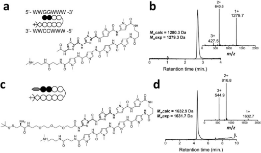 (a) Chemical structure and schematic representation of the reference Py–Im polyamide; (b) RP-HPLC and m/z-spectra of the purified acetylated Py–Im polyamide; (c) Chemical structure and schematic representation of the Py–Im polyamide sequence containing the PEG3-linker and t-BuSH-protected cysteine (Cys-Py–Im-polyamide) after cleavage from the resin using Dp; (d) RP-HPLC and m/z-spectra of the purified Cys-Py–Im-polyamide. Mwexp was obtained after deconvolution of the m/z-spectrum. Mwcalc is the calculated average molecular weight.