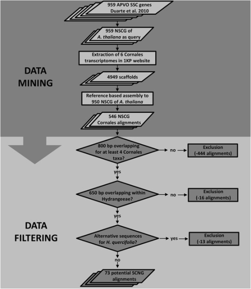 Nuclear single-copy gene mining strategy and data filtering. Data mining and filtering strategy employed for identifying potential NSCG for resolving shallow evolutionary divergences in H. sect. Cornidia
