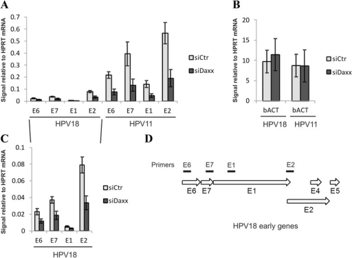 Down-regulation of DAXX represses HPV early gene expression. U2OS cells were first transfected with Daxx siRNA or a control siRNA, and 24 h later with wt HPV18 or wt HPV11 genome. 48 h after transfection total RNA was isolated, reverse transcribed and analyzed by qPCR. Each sample was analyzed in triplicate with E6, E7, E1, E2, beta-actin and HPRT1 specific primers. HPV11 and 18 (a) and bACT (b) mRNA levels were calculated relative to HPRT1 mRNA levels. The data represent the average of three independent experiments. Blow-out of HPV18 part from (a) is shown in (c). d The location of four different primer pairs targeted against HPV E6, E7, E1 and E2 coding sequences in HPV18 early region