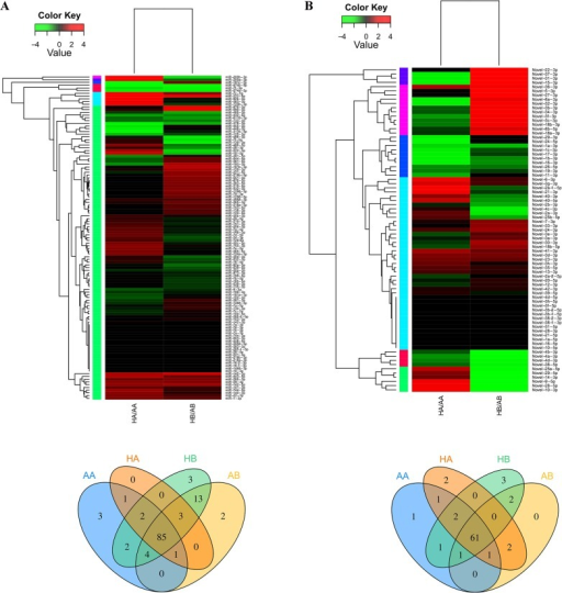 MiRNA expression patterns in four bat libraries.The expression of miRNAs identified in this study were calculated by sequence counts (Transcript Per Million, TPM). Heat maps represent the clustering of miRNAs (up) and the Venn diagram shows the number of miRNAs in each library (down). (A) 119 conserved miRNAs match to the Metazoan mature miRNAs in Sanger miRBase; (B) 77 Novel miRNAs identified by manual screening. Details of differentially expressed miRNAs are shown in S7 Table. HB: hibernating state brain; AB: active state brain; HA: hibernating state adipose tissue; AA: active state adipose tissue.