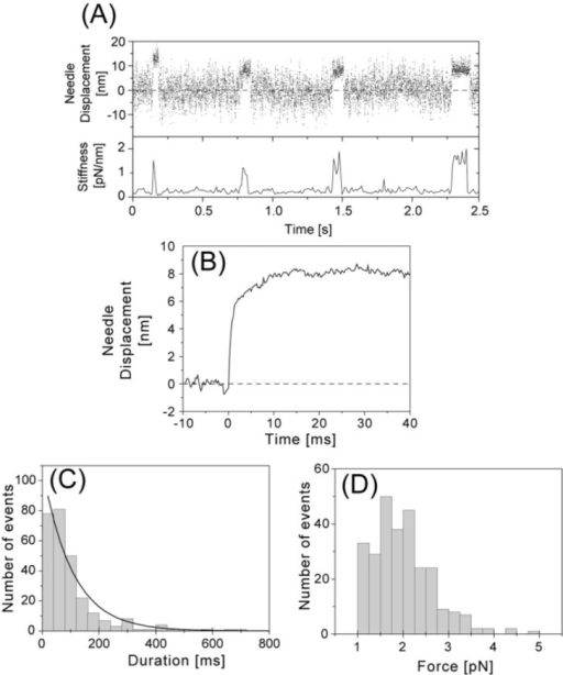 Displacements and forces produced by single S1 molecules at high needle stiffness (0.1–0.6 pN/nm). (A) Representative recording of the generation of displacements by a single S1 molecule (Upper, 2 kHz bandwidth) and changes in the stiffness (Lower). The stiffness was calculated from the variance of the fluctuations of the needle. The stiffness of the needle was 0.21 pN/nm at 1 µM ATP and 20°C. (B) Needle displacement averaged over all observed events at high needle stiffness (n=274). The rising phases of the displacements were synchronized at the starting position by eye and the data at each sampling point was averaged. Mean needle displacement was 8.1 nm and when corrected to S1 displacement, 9.2 nm. (C) Histogram of displacement duration. The solid line shows a single exponential fitted to the distribution by a least squares fit. Time constant was 110 ms. (D) Histogram of forces. The forces were obtained by multiplying the stiffness of the needle by the individual needle displacements. Mean force at the plateau was 2.0 pN. Forces less than 1 pN were excluded in the histogram and from the averaging process.