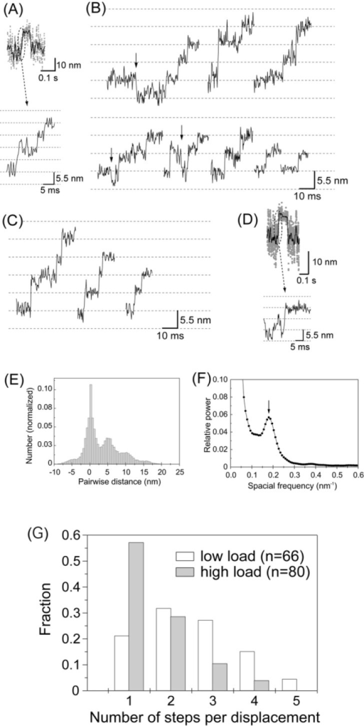 Stepwise movements in the rising phase of the displacements. (A) The rising phase of the displacement record plotted on an expanded timescale. (B) Representative traces of stepwise movements in the rising phase at high needle stiffness (2 kHz bandwidth). Some backward steps were observed as indicated by arrows. (C) Stepwise movements in the rising phase at low needle stiffness (0.01–<0.1 pN/nm) from Kitamura et al.29. (D) The rising phase of the displacement that took place so rapidly that the steps were unclear. (E) Histogram of the pairwise distance for all the data points of stepwise movements in the rising phase at high needle stiffness (number of rising phases=80). (F) Power spectrum of the histogram of pairwise distance shown in (E). An obvious peak was observed at 0.18 nm−1 corresponding to the spatial periodicity of 5.6 nm in the histogram. (G) Histogram of the number of steps per displacement. The steps were counted by eye. Steps of ∼5.5×N nm were counted as N steps. White and gray bars indicate the results obtained at low and high needle stiffness, respectively.