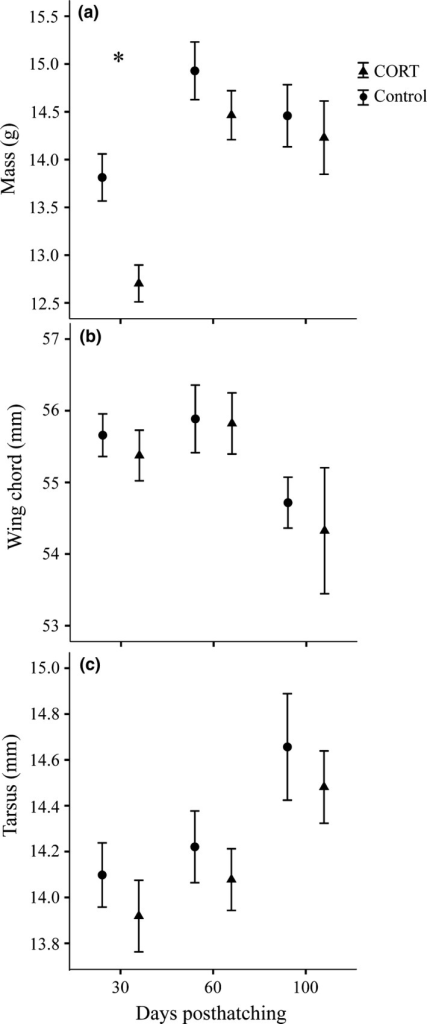 The effects of CORT treatment on body size at 30, 60, and 100 days posthatching for (a) body mass, (b) wing chord, and (c) tarsus. Bars represent ±1 SEM