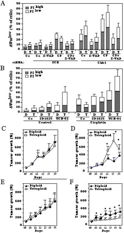 Combined effects of Chk1 inhibition and cisplatin on tetraploid tumor cells in vitro and in vivo.A. Cytotoxic effects of Chk1 depletion in combination with cisplatin. Diploid (D) and tetraploid (T) HCT116 cells were knocked down for Chk1 (or transfected with control siRNA SCR) for 24 h and then cultured in absence or presence of cisplatin (20 µM) for further 48 h. Finally, the frequency of dying (DiOC6(3)low PI−) or dead (DiOC6(3)low PI+) cells was monitored by DiOC6(3)/PI staining. B. Cell killing by pharmacological inhibition of Chk1 plus cisplatin. Cells were cultured with cisplatin (20 µM), UCN-01 (500 nM) and/or SD1825 (500 nM) for 48 h, and dead and dying cells were determined as in A. C–E. Combined effects of Chk1 inhibition and cisplatin on tetraploid tumors established in vivo. Diploid or tetraploid HCT116 tumors were established in vivo and their growth was monitored continuously from day 18 (when tumors measured 125 to 250 mm3), when animals were injected with PBS alone (controls in C), cisplatin (D), UCN-01 (E), or with a combination of both (F). Asterisks indicate significant differences between diploid and tetraploid cells (p<0.05, unpaired Student t test). The results shown in Fig. 6C–E are representative for three different experiments.