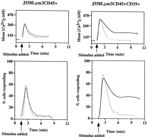 The CD19-negative  and -positive J558Lμm3CD45+  plasmacytoma variants mobilize  [Ca2+]i to different extent after  antigen stimulation. J558Lμm3CD45+CD19− and J558Lμm3CD45+CD19+ cells were loaded  with indo-1 AM, and analysis of  [Ca2+]i initiated before antigen  stimulation (250 ng NP9BSA/ 106cells/ml). Mean [Ca2+]i (top)  and cells responding (bottom) after  antigen stimulation of J558Lμm3CD45+CD19− and J558Lμm3CD45+CD19+. The analysis was  conducted under conditions of  60 nM (dotted line) or 1.3 mM  (solid line) extracellular free calcium concentration buffered as  calculated by the CalCalc program (74). [Ca2+]i was calculated  according to Grynkiewicz et al.  (75). Approximately 600 cells were  analyzed per second. [Ca2+]i in  resting cells is 100 nM.