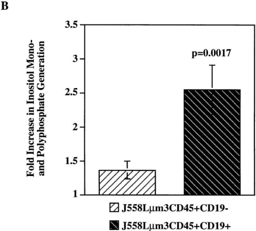 Antigen-induced  IP3 and total inositol phosphate  release is greater in the CD19-positive than in CD19-negative  J558Lμm3CD45+ cells. (A)  Cells (10 × 106/ml) were stimulated with 2.5 μg NP9BSA for  various times and the responses  terminated by addition of 100%  TCA (20% TCA final). After organic extraction the aqueous  phase was assayed for IP3 content  in a [3H]IP3 receptor binding inhibition assay (NEN-DuPont).  The results are expressed as fold  increase of IP3 release over basal  (3 pmol IP3/2.5 × 106 cell  equivalents). Shown is mean fold  increase from three independent  experiments ± standard error.  (B) Cells were labeled with Myo- [2-3H(N)]-inositol (21.0 Ci/mmol; 2 μCi/ml) in inositol-free medium containing 5% FCS at 106 cells/ml for 18 h and the generation of inositol phosphates was measured after stimulation of cells for 25 min with 2.5 μg NP9BSA/107 cells/ml. The fold increase in inositol phosphate release was calculated;  the two cell lines had comparable basal rates of inositol turnover as determined by the basal inositol phosphate release. Shown are the mean fold increases from  three independent experiments ± standard error. Statistical significance was determined by JMP version 3.16 statistical software (SAS Institute, Cary, NC).