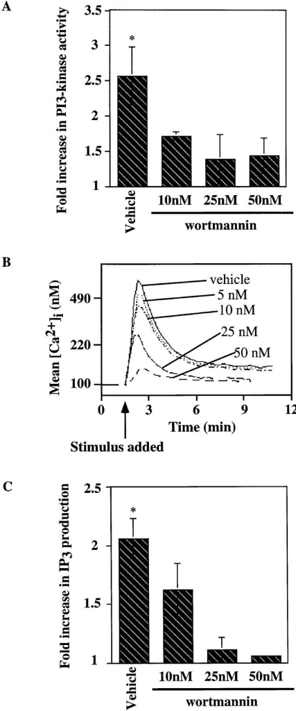 Wortmannin inhibits the antigen-induced increase  in PI3-kinase activity, [Ca2+]i  mobilization and IP3 generation  in the J558Lμm3 CD45+CD19+  plasmacytoma. (A) Cells were  preincubated with DMSO (vehicle) or wortmannin at various  concentrations (in 0.2% final  DMSO concentration) for 25  min at 25°C, prewarmed for 4  min at 37°C, and then stimulated  for 2 min with 1 μg NP9BSA/4  × 106 cells/ml before analysis of  PI3-kinase activation as described in Fig, 4. Shown is the  mean fold increase in activity  over basal from four independent  experiments ± standard error of  the mean. Asterisk indicates a statistical significance of P <0.05 determined by JMP 3.16 statistical  software. (B) To study the effects  of wortmannin on the calcium response, J558Lμm3CD45+CD19+  cells were Indo-1 AM loaded  and preincubated with DMSO  (vehicle) or wortmannin at various concentrations (resulting in  0.2% final DMSO) for 25 min at  25°C, prewarmed for 4 min at  37°C, and stimulated at arrow  with 250 ng NP9BSA/106 cells/ml. Shown is the mean [Ca2+]i over time  with analysis of ∼600 cells/s. [Ca2+]i in resting cells is 100 nM. (C)  J558Lμm3CD45+CD19+ cells were preincubated with DMSO or increasing concentrations of wortmannin, prewarmed, and stimulated with  2.5 μg NP9BSA/107/ml for 1 min before IP3 production was measured  by the IP3 receptor binding inhibition assay. Shown is the mean fold increase over basal in three independent experiments ± standard error of  the mean. Asterisk indicates a statistical significance of P <0.05 determined by JMP 3.16 statistical software.