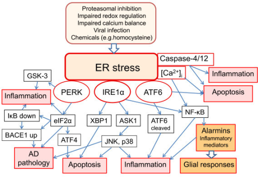 A schematic presentation of the three branches of UPR, their signaling pathways, and pathological responses with respect to inflammation and AD pathology.