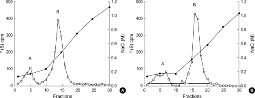 Ion exchange chromatography of cell layer 35S-labeled macromolecules. GEndo were incubated in medium containing (A) 5 mM glucose or (B) 30 mM glucose for 8 to 14 weeks and labeled for 24 hr with 35SO4 as in Fig. 2. Fractions containing proteoglycans in peaks B were pooled as indicted by bars.