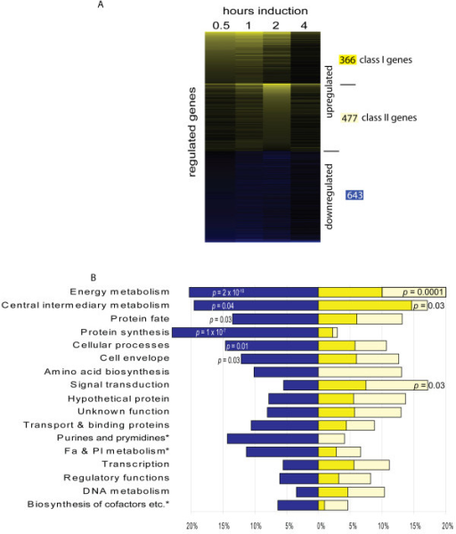 Twenty percent of the protein coding genes are significantly regulated during glycerol-induced sporulation. A. A heat map displaying average fold-changes of 1 485 genes whose expression is significantly regulated in at least one time point ≥ two-fold above (yellow) or below (blue) vegetative cells at the indicated hours after induction with glycerol. Upregulated genes were first organized into two self-organizing maps of genes whose expression peaks early (class I) and late (class II) and sorted by descending fold induction at 0.5 and 2 hours, respectively. Downregulated genes were sorted by descending fold induction at 0.5 hours. The number of class I and class II upregulated and downregulated genes is indicated to the right according to the colour scheme in B. B. Functional characterization of gene expression patterns. The percent of significantly down- (blue), class I up- (yellow), and class II up- (orange) genes in the listed JCVI main role categories. Role assignments were modified as described in Materials and Methods. *: main role abbreviations: Fa & Pl metabolism: Fatty acid and phospholipid metabolism; Biosynthesis of cofactors etc.: Biosynthesis of cofactors, prosthetic groups, and carriers; Purines and pyrimidines: Purines, pyrimidines, nucleosides, and nucleotides.
