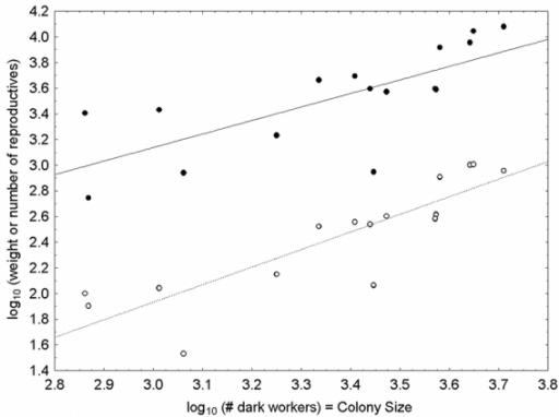 Weight and numeric allometries of reproductive production. Filled symbols (with solid line) are weights and open symbols (with dashed line) numbers. The independent axis is the number of mature workers in a colony (colony size). The slope (scaling exponent) of the weight-colony size relationship is 1.06 and for numeric data is 1.37. Neither slope is statistically different than 1.