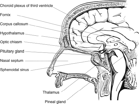 Worksheet Answers further Detailedresult further Anatomy Humanbody blogspot furthermore 127 together with  on location of pituitary gland in humans