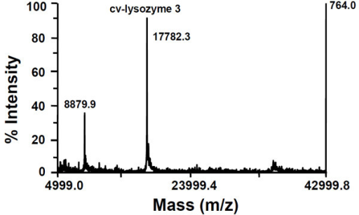 MALDI mass spectrum of purified cv-lysozyme 3. Cv-lysozyme 3 was detected as an MH+ ion at m/z 17782.3. The signal at m/z 8879.9 represents the doubly charged intact cv-lysozyme 3 molecule.
