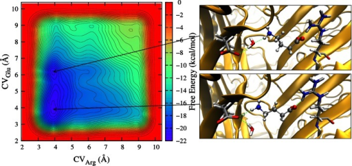 Left: Free energy map of GABA in the RDL-GluCl1 model as a function of the distance of the GABA amine from Glu204 side chain (CVGlu) and of the GABA carboxylate from the Arg111 side chain (CVArg). Right: Binding arrangements corresponding to the free energy minima