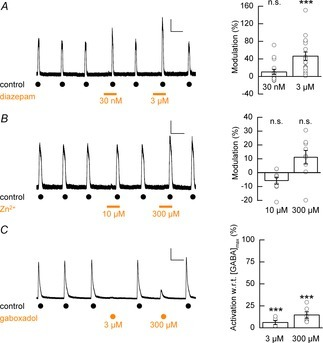 Modulation of hECN GABAARs by diazepam, Zn2+ and gaboxadolA, left panel: representative whole-cell recording depicting the co-application of diazepam (30 nm and 3 μm, as indicated by bars) to control GABA-evoked responses. A, right panel: modulation of GABAAR-mediated currents by diazepam (30 nm and 3 μm, n = 17, N = 3). Data are presented as mean percentage modulation with respect to control recordings. No difference was observed between percentage modulation and the batch from which cells were prepared. Calibration bar 50 pA, 50 s. B, left panel: example whole-cell recording depicting the co-application of Zn2+ (10 μm and 300 μm, as indicated by bars) to control GABA-evoked responses. B, right panel: mean percentage modulation of control GABAAR-mediated currents by Zn2+ (n = 9, N = 1). Calibration bar 100 pA, 50 s. C, left panel: example whole-cell recording of GABA (3 mm)-evoked currents and gaboxadol (3 μm and 300 μm)-induced currents. C, right panel: mean percentage gaboxadol-induced activation of GABAAR currents with respect to (w.r.t.) maximum GABA-evoked currents (n = 6–7, N = 1). Calibration bar 500 pA, 50 s.