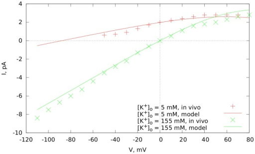 Current-voltage dependency for the  current in our model.The experimental data is from [16].