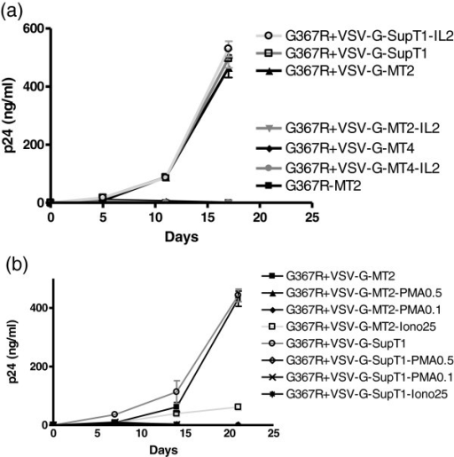 p24 production in MT2, MT4 and SupT1 cells after infection by G367R virus that had been pseudotyped with VSV-G viruses in the presence of IL2, PMA or ionomycin. MT2 cells were infected for 3 hours at 37°C, then washed with medium, and 105 cells were split into wells in triplicate for growth in the presence or absence of 20 IU/ml of IL2 (a), 0.1, 0.5 ng/ml of PMA or 25 ng/ml of ionomycin (b).
