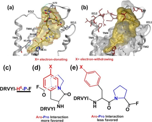 3D model of the AII–AT1R complex and the electronictuningstrategy used in this work for AII. (a) Key interactions between thehormone AII (yellow stick and surface) and AT1R (gray stick), comprisinghydrogen bonds (red dashed line) and hydrophobic contacts (green dashedline). (b) Conserved regions between AT1R and AT2R depicted in graystick and surface; unconserved regions are highlighted in a red stickrepresentation. ECL1, ECL2 correspond to the extracellular loops 1and 2 and TM2, 4, 5, and 6 correspond to transmembrane regions 2,4, 5, and 6, respectively. (c) The sequence of the hormone AII withits C-terminus highlighted. (d,e) The H6 of AII was alteredin this work with 4-X substituted phenylalanine on the frame of anelectronic strategy to regulate the compactness of the AII C-terminus.In (d) electron-rich aromatic residues stabilize the aromatic-prolylinteractions and lead to compactness,18 and in (e) electron-deficient aromatic residues result in less favorablearomatic-prolyl interactions and relatively reduced compactness.
