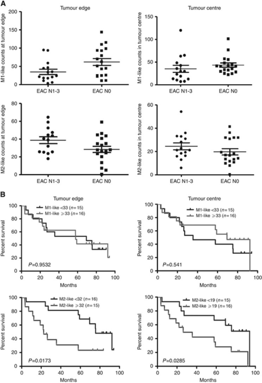 M2-like macrophage is associated with poor overall survival, but not associated with lymph node spread in EAC patients without neoadjuvant therapy. (A) The count of M1 or M2 macrophage in tumour centre and at tumour edge is not significantly different between EACs with (EAC N1-3) and without lymph node metastasis (EAC N0). (B) Kaplan–Meier overall survival curves of 31 EAC patients stratified by the counts of M1-like and M2-like macrophage based on the median number.