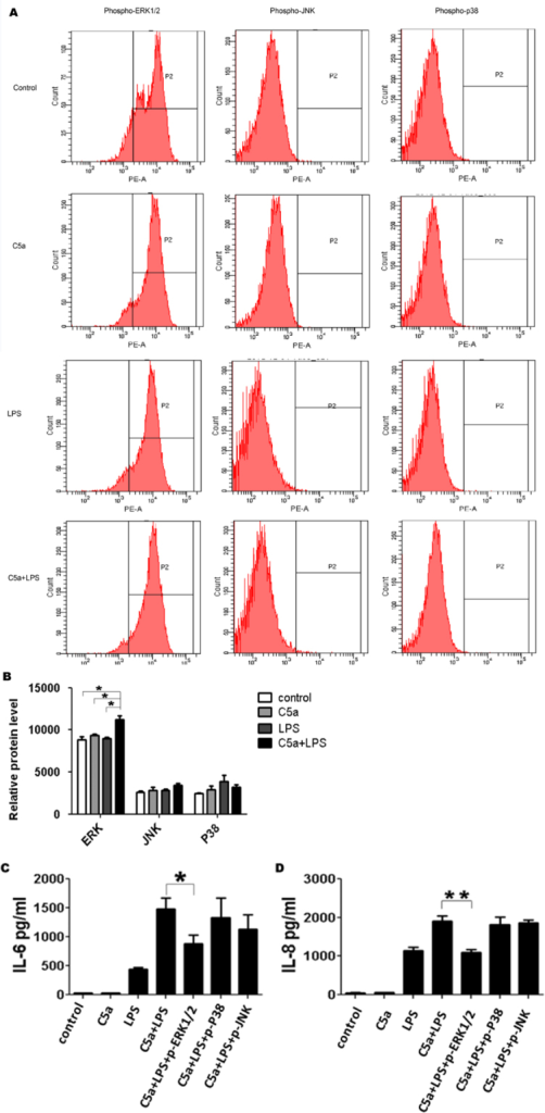 C5a regulates TLR4-induced IL-6 and IL-8 expressions through the activation of ERK1/2. ARPE-19 cells were stimulated with LPS (100 ng/ml) in the absence or presence of C5a (50 ng/ml) for 30 min. A: Representative histograms for the phosphorylation of MAPK are shown at 30 min. B: The MFI of phosphor-ERK1/2, JNK, and P38. C5a was added to the culture 10 min before LPS challenge. Inhibitors of JNK (SP = SP600125, 10 uM), ERK1/2 (PD = PD98059, 20 uM), and P38 (SB = SB239063, 20 uM) were added 1 h before LPS stimulation. C and D: Contribution of ERK1/2, JNK, and P38 to the effect of C5a on TLR4-induced IL-6 (C) and IL-8 (D) expressions. The data are expressed as the mean±SD of three independent experiments. Statistical analysis was performed using a one-way ANOVA (* indicates p<0.05 and ** indicates p<0.01).
