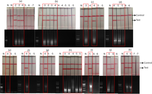 CPA-NATS and gel electrophoresis results of different components and conditions optimization: (a) external primers, (b) probe, (c) cross primer, (d) dNTP, (e) MgSO4, (f) betaine, (g) Bst DNA polymerase, (h) reaction time of 60 min, (i) reaction time of 75 min, (j) reaction time of 90 min, and (k) agarose gel electrophoresis confirmations of the CPA reaction corresponding to the results on the strips. N, negative control.