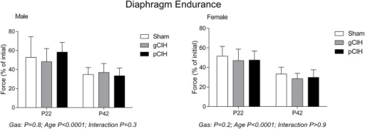 Effects of early life exposure to CIH on diaphragm muscle fatigue in male and female rats under control conditions ex vivo. Fatigue index at 5 min (mean ± SD, % of initial force) of diaphragm muscle in male and female rats at postnatal day (P) 22 and P42 examined under control conditions ex vivo. Animals were exposed to sham (normoxia), gestational chronic intermittent hypoxia (gCIH), or postnatal CIH (pCIH). P-values following two-way ANOVA (gas × age) are reported. N-values for animals as per Table 1.