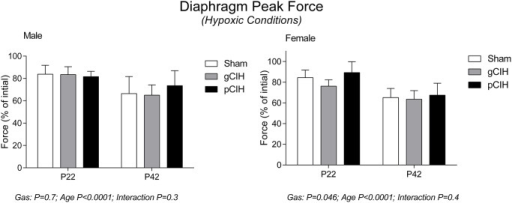 Effects of early life exposure to CIH on diaphragm muscle force in male and female rats under hypoxic conditions ex vivo. Group data (mean ± SD) for peak diaphragm force expressed as percentage of initial peak diaphragm force (in control conditions) in male and female rats at postnatal day (P) 22 and P42 examined under hypoxic conditions ex vivo. Animals were exposed to sham (normoxia), gestational chronic intermittent hypoxia (gCIH), or postnatal CIH (pCIH). P-values following two-way ANOVA (gas × age) are reported.