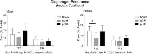 Effects of early life exposure to CIH on diaphragm muscle fatigue in male and female rats under hypoxic conditions ex vivo. Fatigue index at 5 min (mean ± SD) of diaphragm muscle in male and female rats at postnatal day (P) 22 and P42 examined under hypoxic conditions ex vivo. Animals were exposed to sham (normoxia), gestational chronic intermittent hypoxia (gCIH), or postnatal CIH (pCIH). P-values following two-way ANOVA (gas × age) are reported. *P < 0.05 Sidak post-hoc test.