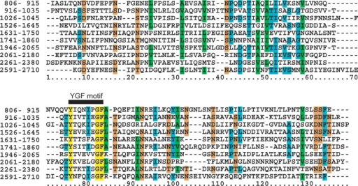 Multiple sequence alignment of 10 subsequences of Gli349 containing a YGF motif is shown. The start and end positions of each repeat are denoted in the first column. Colors on the sequences denote as follows: yellow, 100% conserved residues; cyan, >50% conserved residues; orange, sites that are >70% conserved for D, N, S and T; green, sites that are >70% conserved for A, I, L and V.