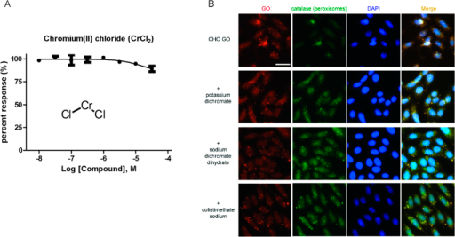 (A) Concentration-response of chromium(II) chloride (450782, Sigma-Aldrich) determined in the GO enzymatic assay. (B) Immunofluorescence images of GO localized in peroxisomes. CHO GO cells were treated with 100 μM potassium dichromate, sodium dichromate dihydrate, or colistimethate sodium for 2 h, then immunostained for GO, the peroxisomes (catalase) and the nucleus (DAPI), and finally analyzed by fluorescence microscope (Scale bar, 30 μm). Compound treatment did not significantly change the localization and amount of GO in peroxisome.