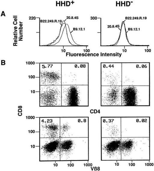 Phenotypical characterization of H-2Db−/−, β2m−/−, HHD  transgenic mice. Flow cytometric analyses were performed on spleen T  lymphocytes from H-2Db−/−, β2m−/−, HHD+ (left), or HHD− (right)  mice. (A) Expression of H-2Kb, H-2Db, and HHD molecules detected  with 20.8.4.S, B22.249.R.19, or B9.12.1 mAb, respectively and F(ab)′2  FITC-conjugated goat anti–mouse IgG, negative controls with no first  mAb. Results are expressed in fluorescence intensity (x-axis, log scale) and  relative cell number (y-axis). (B, top) Partial restoration of the peripheral  pool of CD8+ T lymphocytes. Double staining was performed with phycoerythrin-labeled anti-CD4 (x-axis, log scale) and biotinylated anti-CD8  detected with streptavidin–Perc-P (y-axis, log scale). (Bottom) Peripheral  CD8+ TCR repertoire. As illustrated for Vβ8.1.2.3, double staining was  performed with FITC-labeled anti-Vβ2 (B.20.6), -Vβ3 (KJ.25), -Vβ4  (KT.10.4), -Vβ5.1,.2 (MR.9.4), -Vβ6 (44.22), -Vβ7 (TR 130), -Vβ8.1,.2,.3  (F.23.1), -Vβ9 (MR.10.2), -Vβ10 (B.21.5), -Vβ11 (RR.3.15), -Vβ13  (MR.12.4), and -Vβ17 (KJ.23.1)–specific mAb (x-axis, log scale) and phycoerythrin-labeled anti-CD8 mAb (y-axis, log scale).