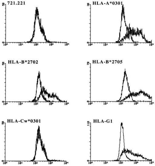 ILT2 soluble protein binds HLA-A, -B, and -G1 transfectants. HLA-B*2702, -B*2705, -A*0301, -G1, and -Cw*0301 transfectants  in 721.221 and untransfected cells were incubated with a soluble ILT2– IgG1 fusion protein, followed by a PE-labeled goat anti–human IgG antibody. Binding was assessed by FACS® analysis. HLA class I expression of  the transfectants was determined in the same experiment by FACS® analysis using the w6/32 mAb (IgG2a; American Type Culture Collection).  MFI were as follows: 721.221, 121; HLA-B*2702, 2128; -B*2705, 3045;  -A*0301, 3854; -G1, 1084; -Cw*0301, 1582. The binding pattern did not  correlate with the level of class I expression on the transfectants.