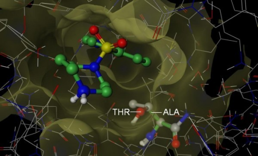 Structural basis for Fasudil selectivity. The 3D structure of PKA (PDB 1Q8T, wire rendering with grey carbons) superposed onto the structure of Rock1 (hidden) in complex with Fasudil (PDB 2ESM, ball and stick rendering with green carbons). Ala 215 (Stick rendering with green carbons) of Rock1 is smaller than Thr 183 (ball and stick rendering with grey carbons) of PKA which protrudes the pocket of ROCK (mustard surface). By mutating Thr 183 in PKA to the corresponding position in Rock (Ala 215), Bonn et al demonstrated that Fasudil inhibited the mutant PKA at levels similar to ROCK [26]. The smaller residue was proposed by Bonn et al to allow Fasudil deeper access to the active site. Based on the above observations, we conclude that S-Filter correctly predicted Ala 215 as a specificity determinant.