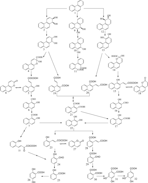 Proposed Catabolic Pathways Of Phenanthrene By Bacteria